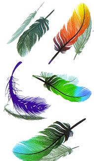 Faux tatouage plumes