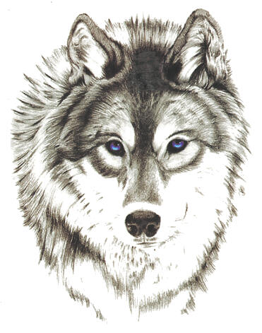 Tatouage temporaire loup aux yeux bleux