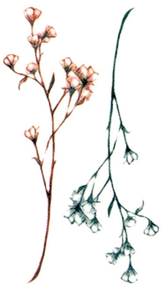 Tatouage ephemere fines fleurs rose et verte
