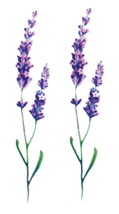 Tattoo fines fleurs violettes