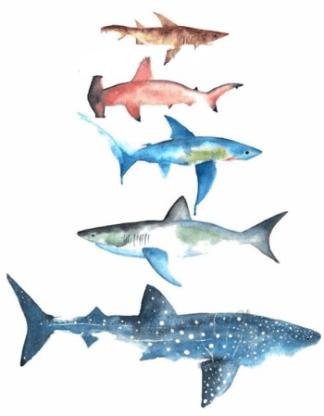 Tatouage temporaire requins