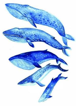 Tatouage ephemere baleines bleues